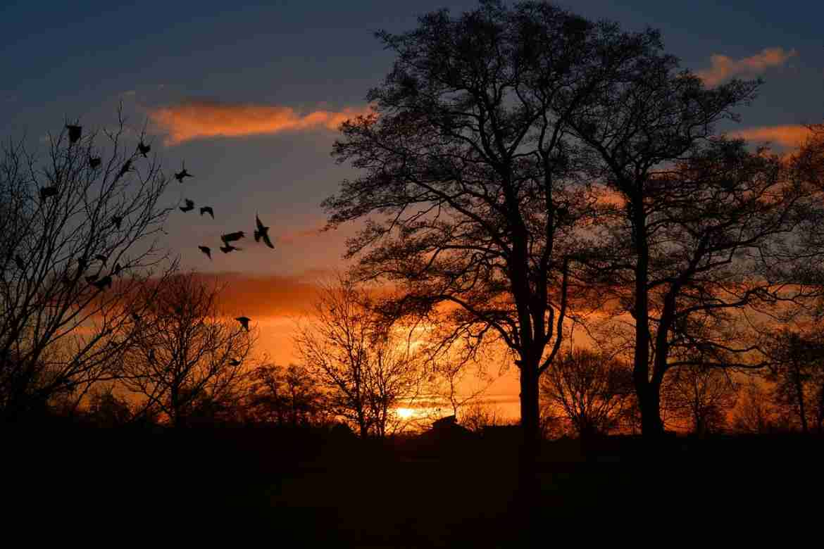 Sunrise with birds and trees
