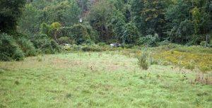 Stockwell Farm Field